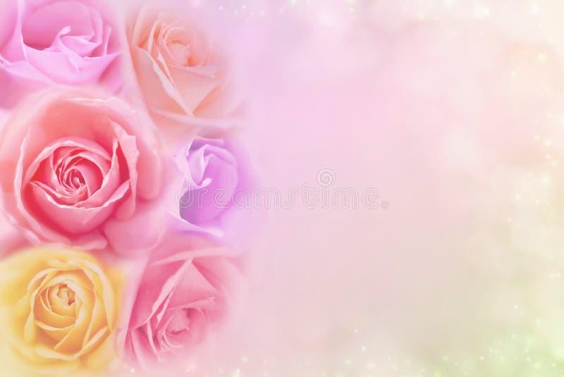 Le belle rose fioriscono in filtri colorati molli, nel fondo per il biglietto di S. Valentino o nella partecipazione di nozze immagini stock