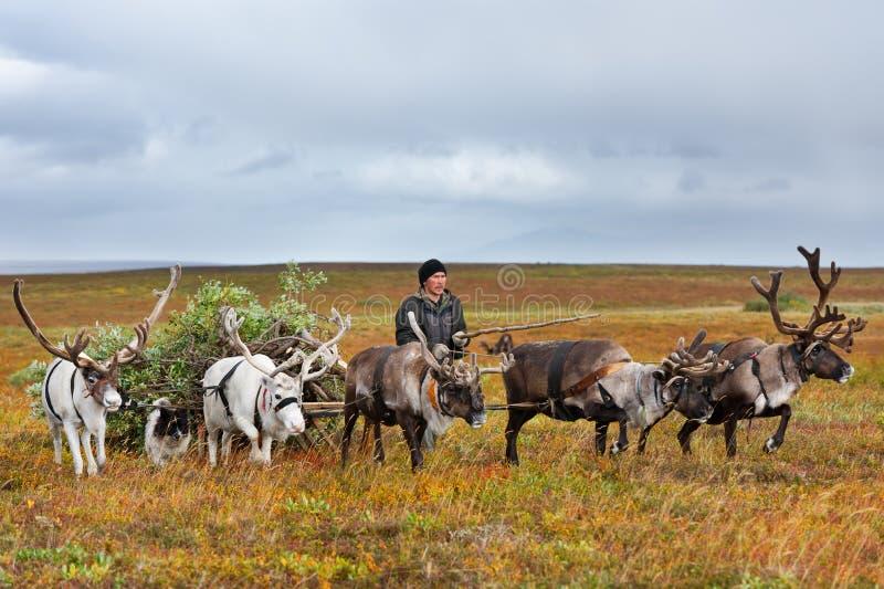 Le berger de nomade mène le traîneau avec le bois de chauffage à un camp photos stock