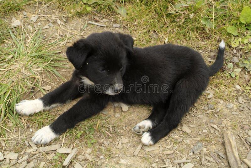 Le Bhutan, zoologie photos stock