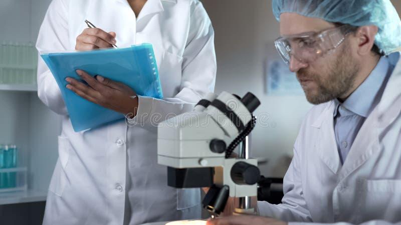 Le biologiste étudiant des échantillons sous le microscope, assistant notant commente photos stock