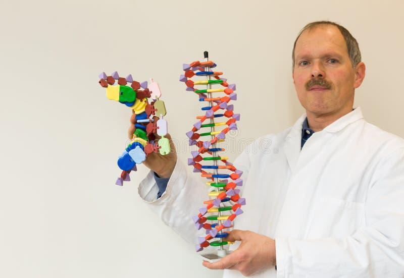 Le biologiste montre l'ADN et l'ADN messagère photos libres de droits