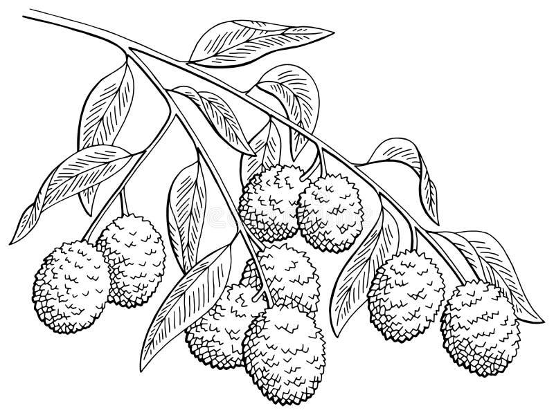 Le blanc graphique de noir de branche de fruit de litchi a isolé le vecteur d'illustration de croquis illustration de vecteur