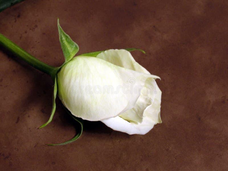 Download Le blanc a monté photo stock. Image du cheminée, death, blanc - 85062