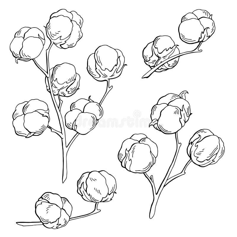 Le blanc noir graphique d'usine de coton a isolé l'illustration de croquis illustration de vecteur