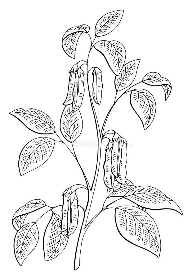 Le blanc noir graphique d'usine de soja a isolé le vecteur d'illustration de croquis illustration libre de droits