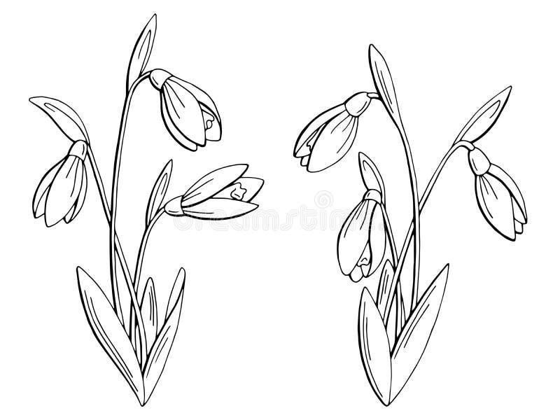 Le blanc noir graphique de fleur de perce-neige a isolé l'illustration de croquis illustration libre de droits