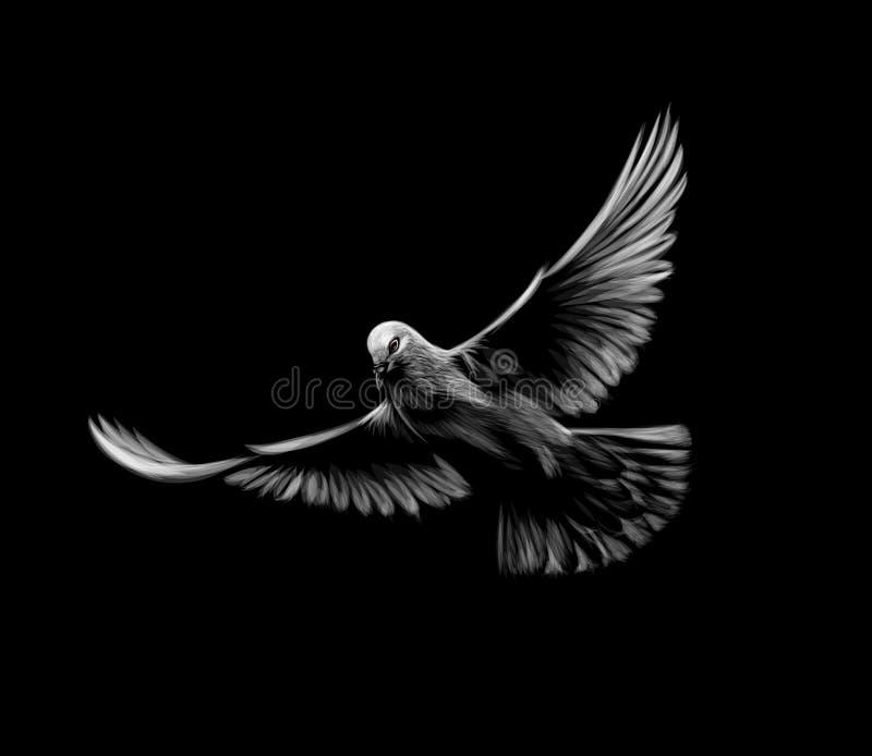 Le blanc volant a plongé sur un fond noir illustration stock