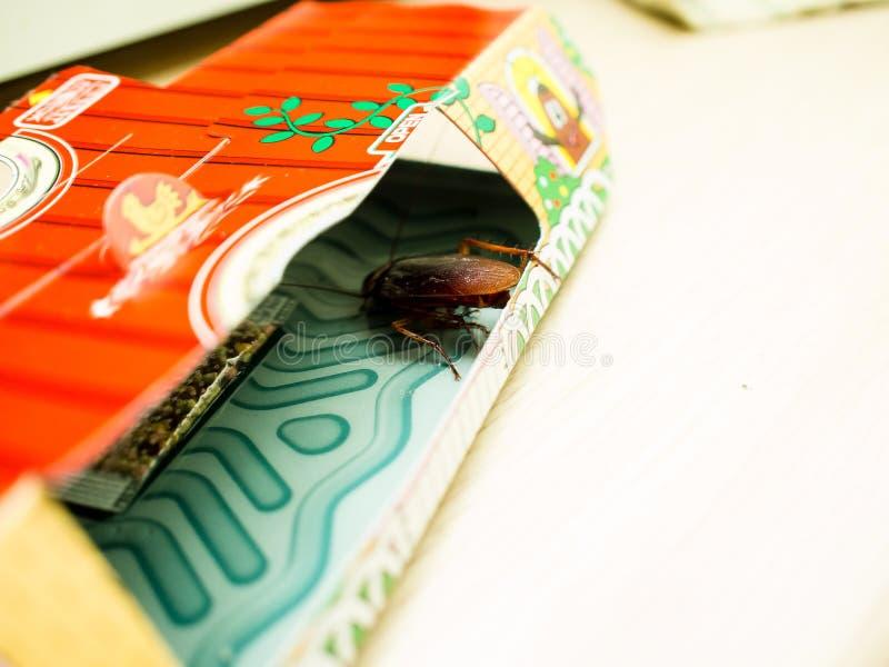 Le blatte hanno intrappolato le blatte bloccate bacini di sedimentazione nel kitche fotografia stock libera da diritti