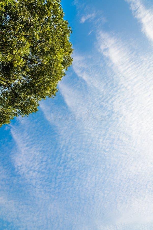le bleu de fond opacifie le blanc de ciel photo libre de droits