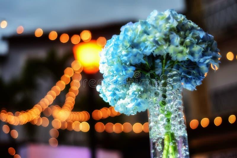 Le bleu fleurit des hortensias photo stock