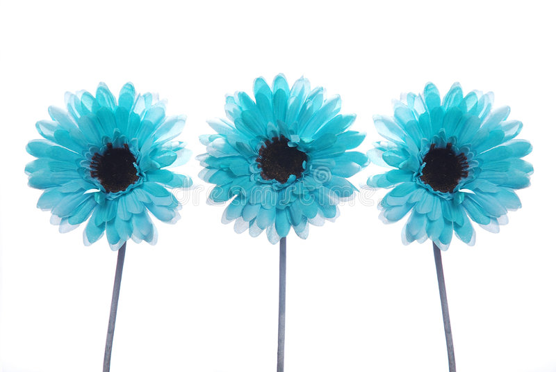le bleu fleurit trois photos libres de droits