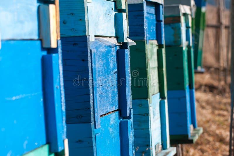 Le bleu, verdissent les ruches peintes d'abeille en décembre images libres de droits