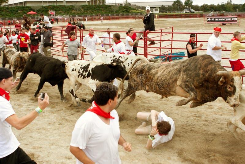 Le boeuf saute l'homme piétiné en Georgia Bull Run photographie stock libre de droits