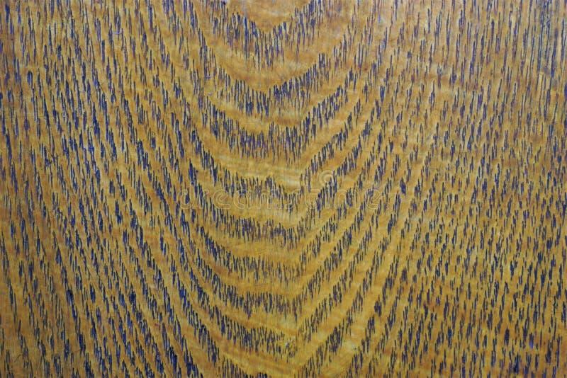 Le bois de chêne est durable, fort, dense, dur et lourd image libre de droits