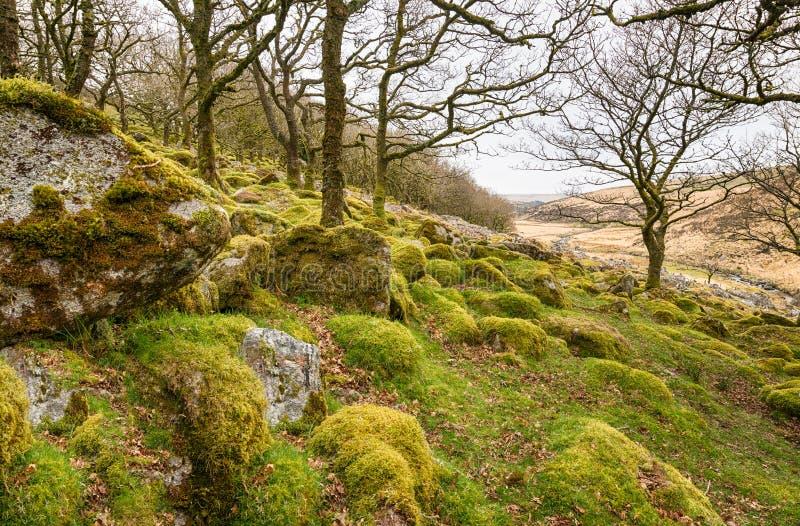 Le bois de Wistman sur Dartmoor photo libre de droits