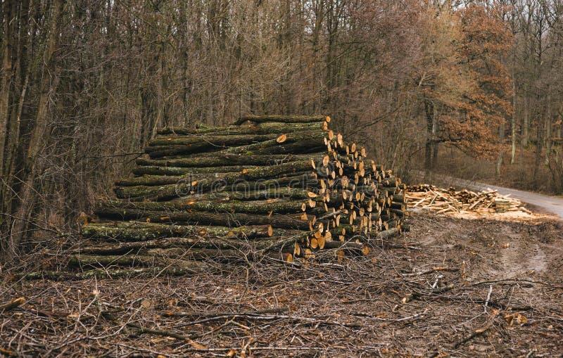 Le bois empilé ouvre une session la forêt le jour ensoleillé Tas du chêne en bois, hêtre, pin avec le chemin sur le fond Photo de photo stock
