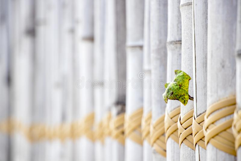 Le bois en bambou de couleur claire et la boucle jaune rope le fond de plan rapproché photos stock