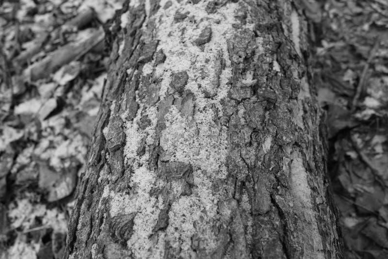 Le bois est couvert de neige photographie stock libre de droits
