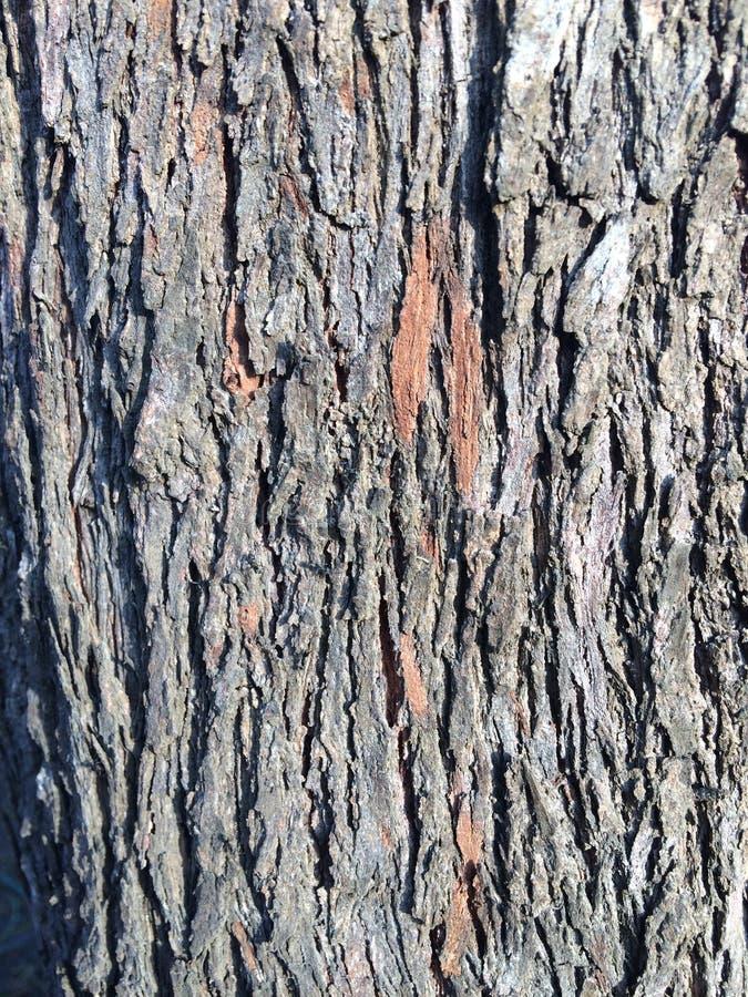 Le bois gris donne au détail une consistance rugueuse images stock