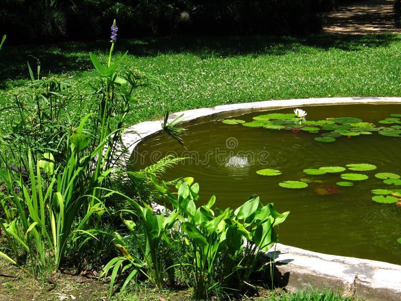 Le bord de l'étang photo libre de droits