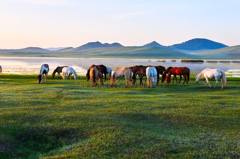 Le bord de lac de manada photos libres de droits