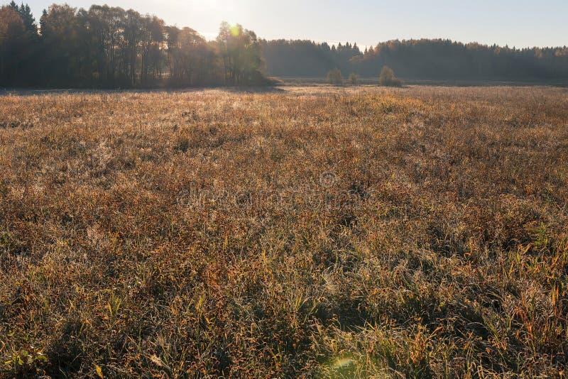 Le bord des prés et des forêts Herbe congelée et les dernières fleurs de pré dans le pré dans le soleil de matin photographie stock