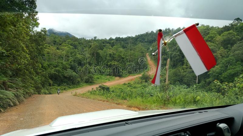 Le Borneo& x27 ; jungle de s photos libres de droits