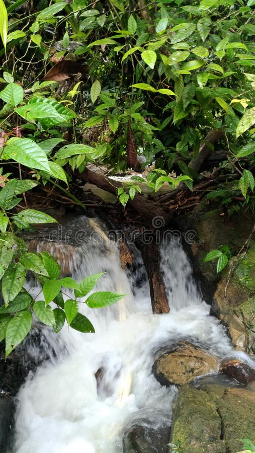 Le Borneo& x27 ; jungle de s photographie stock libre de droits