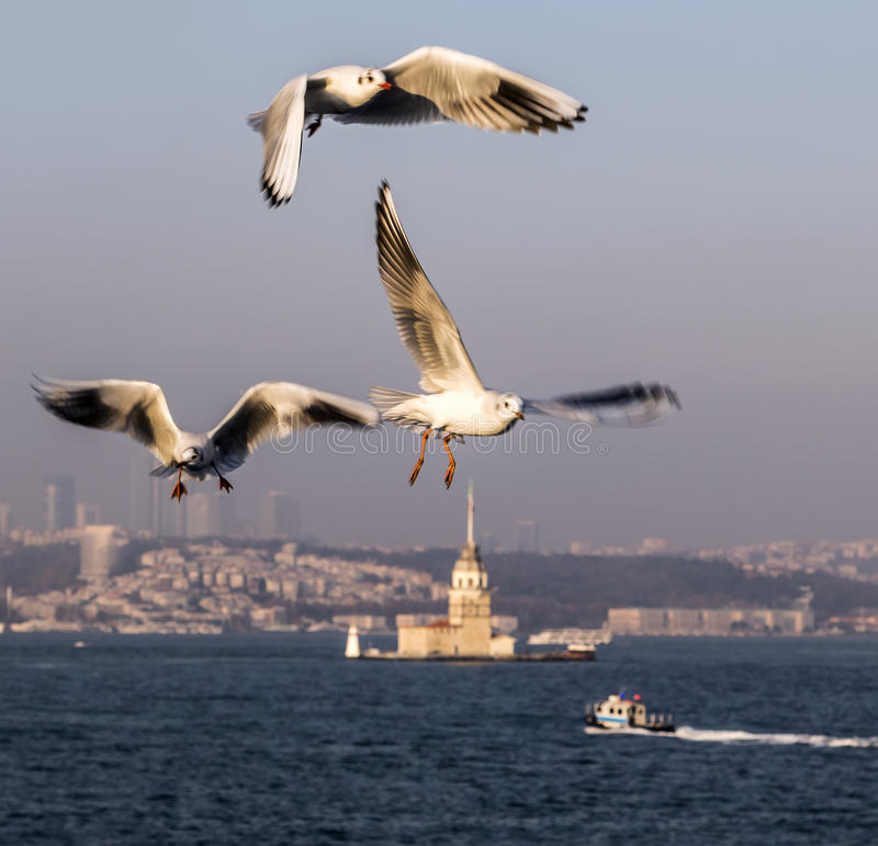 Le Bosphorus, Istanbul images stock