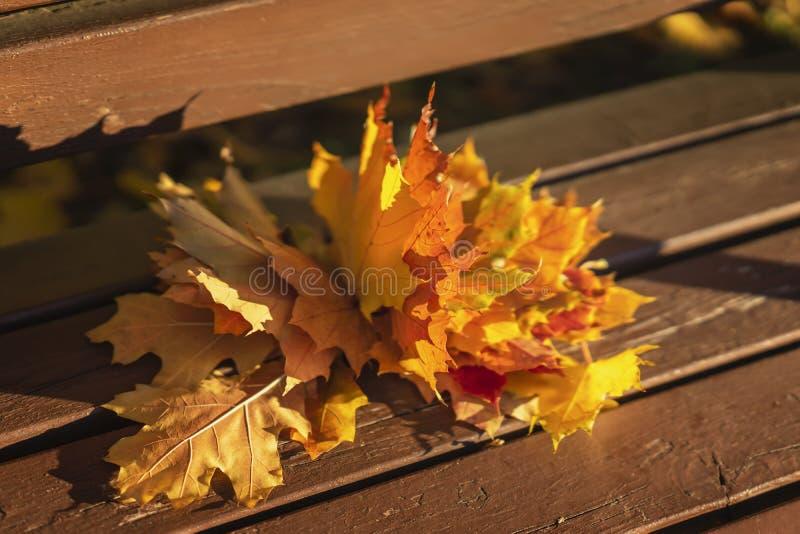 Le bouquet de l'érable tombé jaune laisse le plan rapproché se trouvant sur un banc en bois un jour ensoleillé image libre de droits