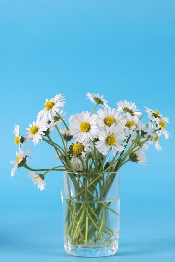 Le bouquet de la marguerite blanche fleurit dans le vase en verre sur le bleu photos libres de droits