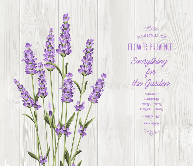 Le bouquet de lavande illustration stock