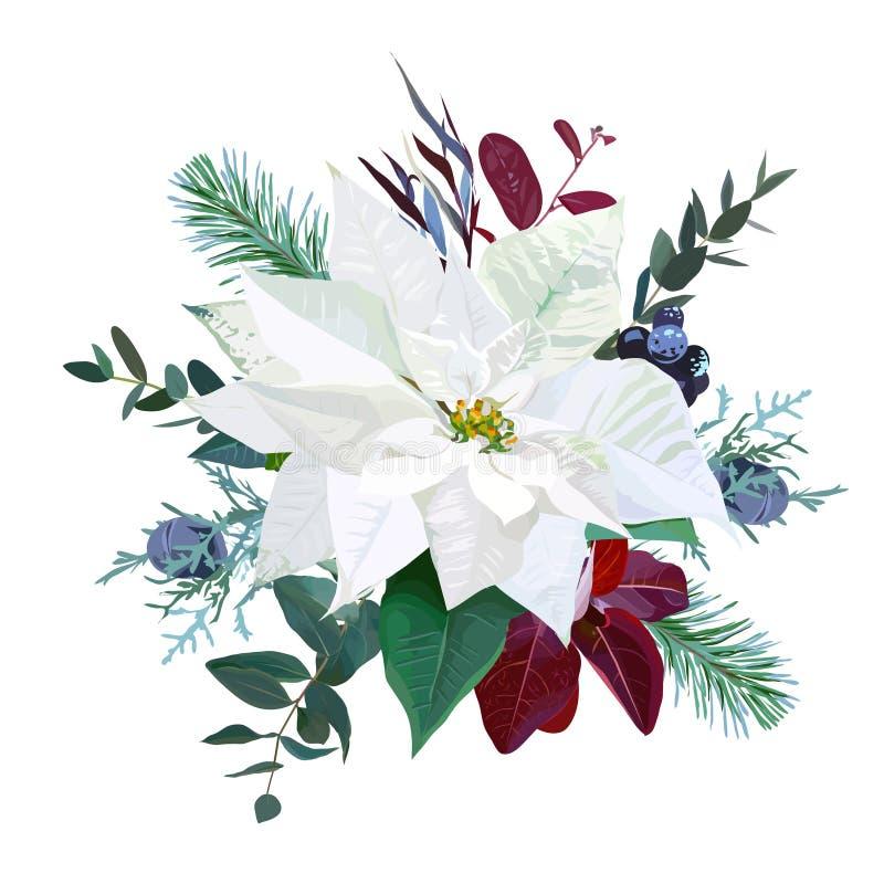 Le bouquet de Noël a arrangé de la poinsettia blanche, parvifolia illustration stock