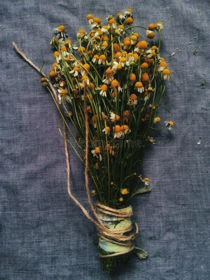 Le bouquet des camomiles photographie stock