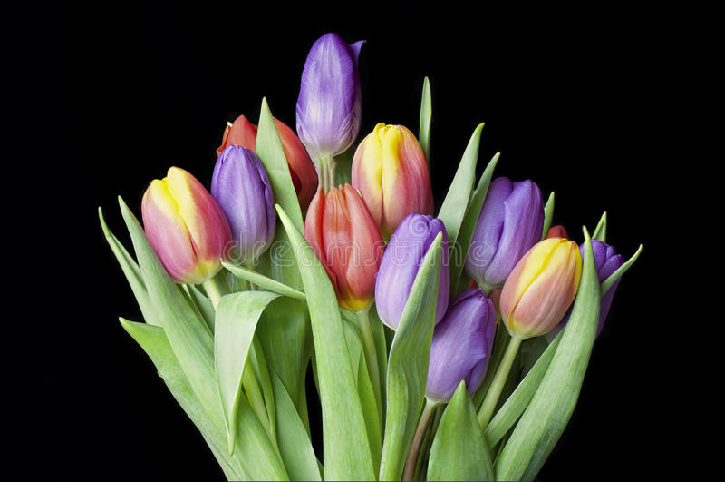 Le bouquet des oeillets Coloured a placé dans un groupe images stock