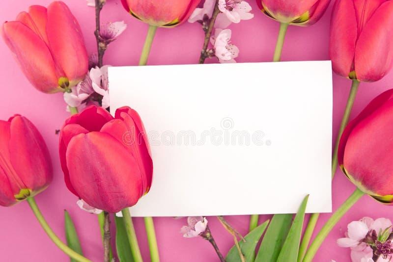 Le bouquet des tulipes et du ressort roses fleurit sur le fond rose photographie stock