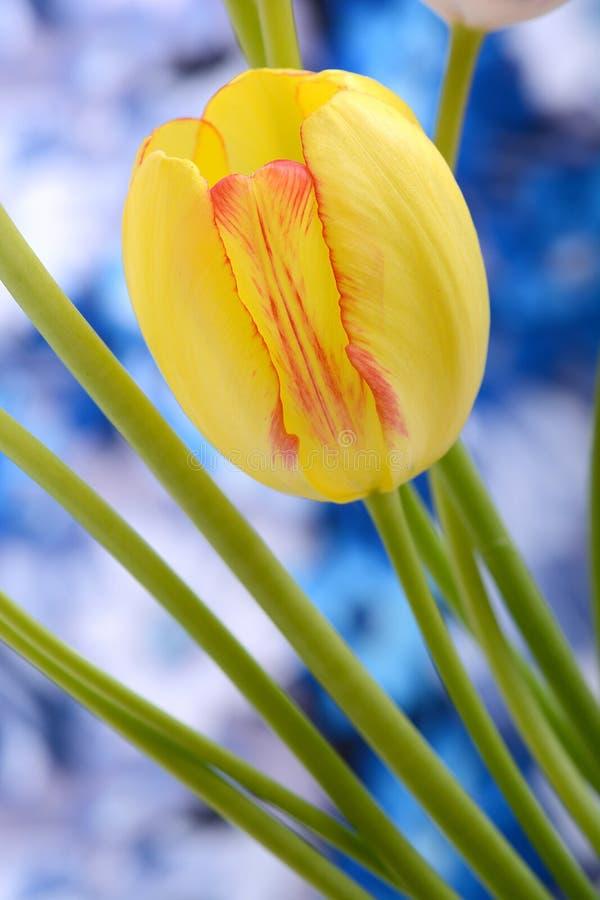 Le bouquet des tulipes jaunes sur un fond bleu, se ferment  photo stock