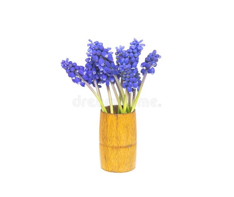 Le bouquet du beau bleu fleurit des hyacinthes d'isolement sur b blanc photo libre de droits