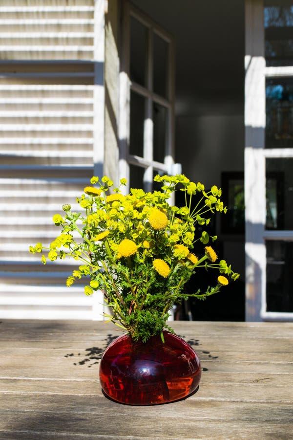 Le bouquet du beau jaune frais de gisement de ressort fleurit le tansy dans le vase en verre rouge sur la table en bois dans le j image libre de droits