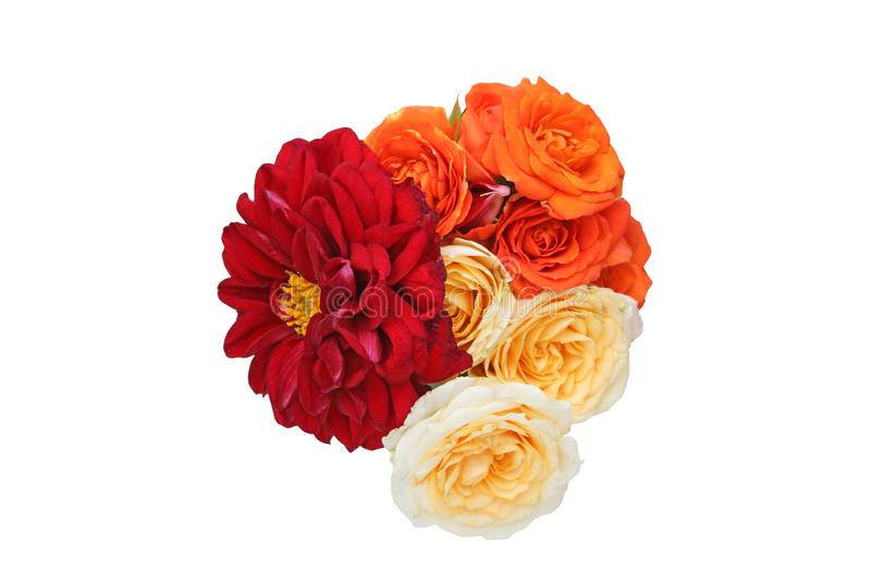 Le bouquet du dahlia et s'est levé à un arrière-plan blanc photo libre de droits