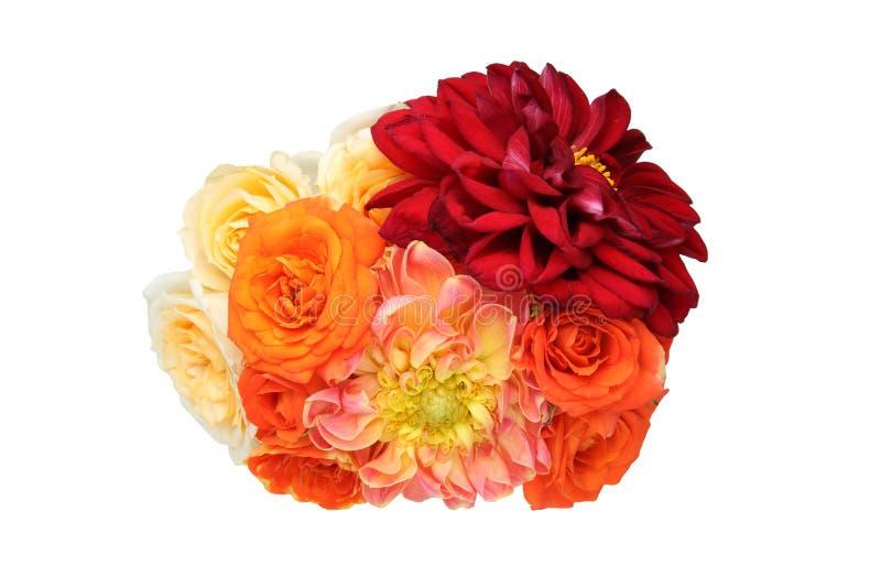 Le bouquet du dahlia et s'est levé à un arrière-plan blanc photos libres de droits