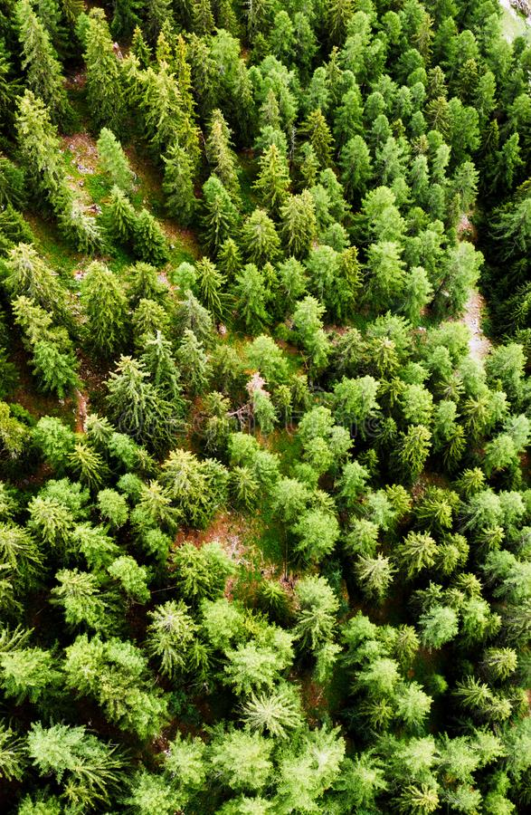 Le bourdon d'arbres forestiers a tiré la Suisse photos libres de droits