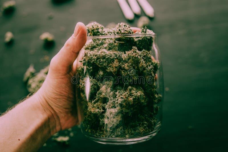 Le bourgeon de cônes de la marijuana fleurit le cannabis à disposition du ton vert déprimé de noir de l'homme photographie stock