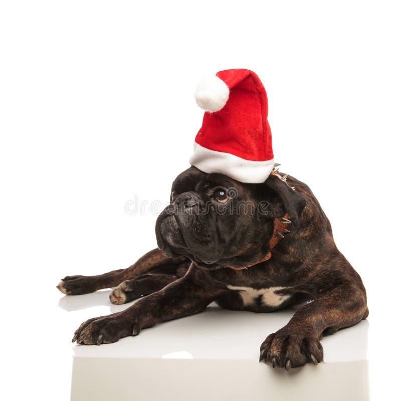Le boxeur menteur adorable avec le chapeau de Santa regarde pour dégrossir images libres de droits