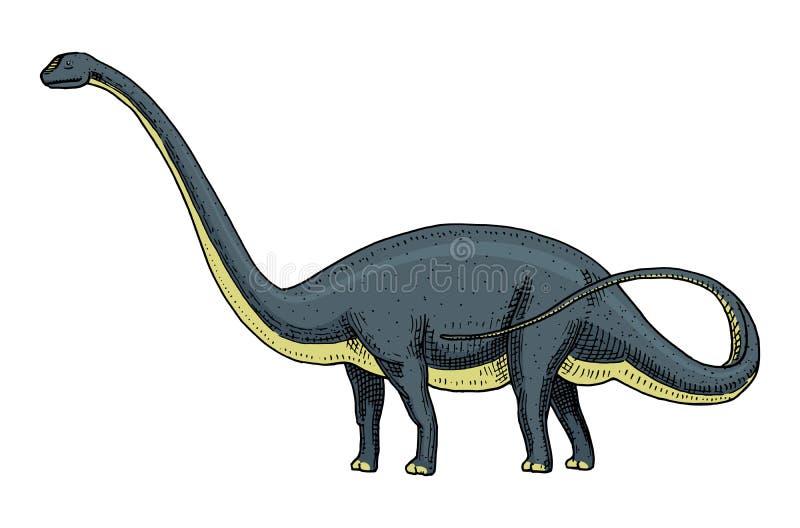 Le Brachiosaurus de dinosaure ou le sauropod, Plateosaurus, Diplodocus, Apatosaurus, squelettes, fossiles, s'est envolé le lézard illustration libre de droits