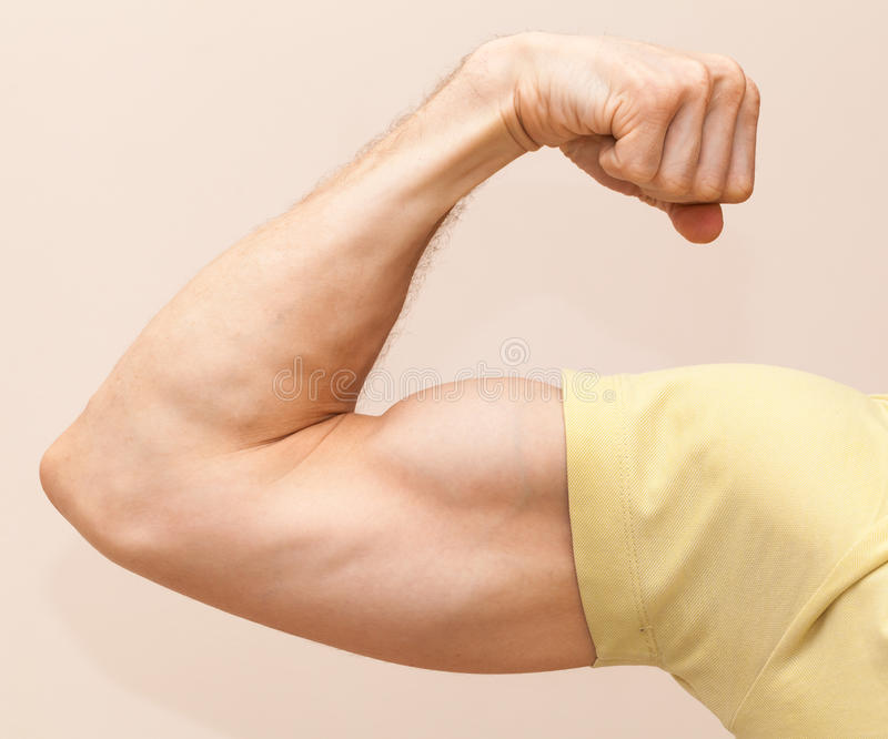 Le bras masculin fort montre le biceps images stock