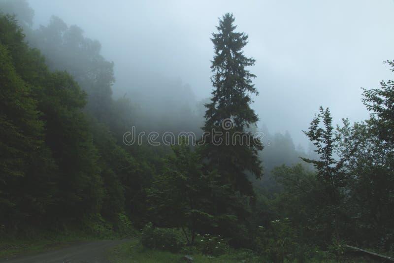 Le brouillard de forêt s'est étendu sur les dessus des montagnes de temps d'arbres image stock