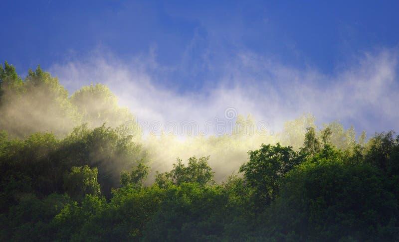 Le brouillard se lève au-dessus de la forêt après la pluie pendant l'été images libres de droits