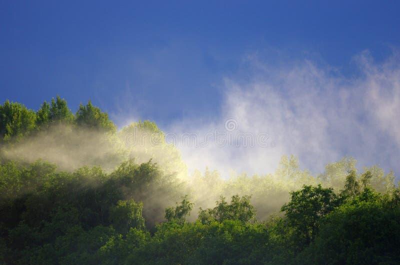 Le brouillard se lève au-dessus de la forêt après la pluie pendant l'été photos libres de droits