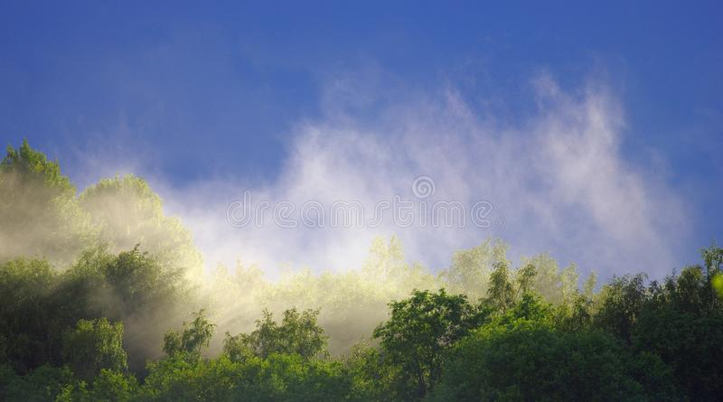 Le brouillard se lève au-dessus de la forêt après la pluie pendant l'été photos stock